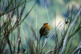 Sustainable travel guide: Bird Watching in Portugal