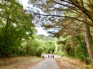 covid-friendly Sustainable walking tours for post-covid