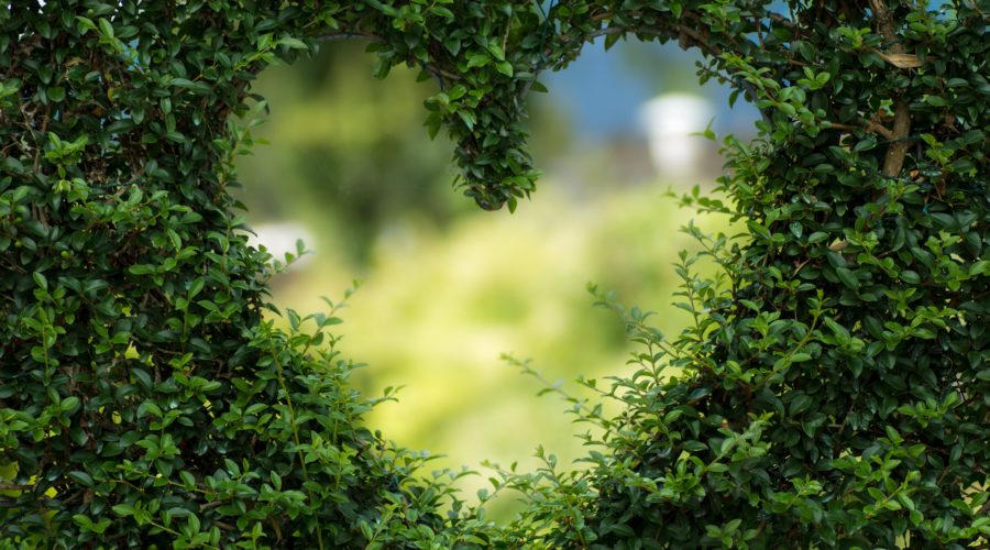 Green hedge with a heart cutout in the center